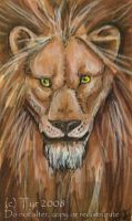 Lion ACEO by tyreenya