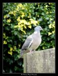 Abbots Bromley (DSCF2939 #2a colour) by Chattering-Magpie