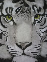 Tiger by AnominusMidge
