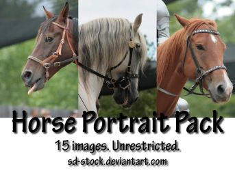 Horse Portrait Pack by sd-stock
