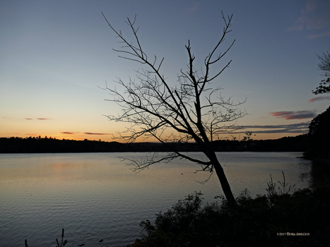 Good Night Horn Pond by Mogrianne