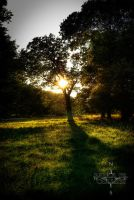 Summers End by PaulaMCollins