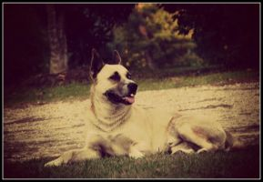 Rusty in the Front Yard by sentry-sight