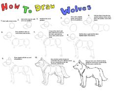 How To Draw Wolves: Bodys by XxMaz-AlmightyxX