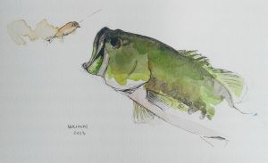 Largemouth bass - watercolor by Noritomi