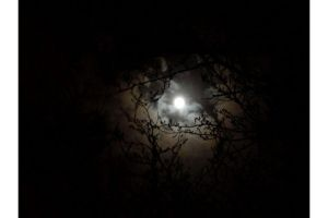 this trees moon by gensanity