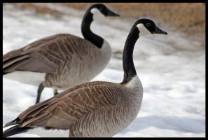 Geese in Stride by Gyroid