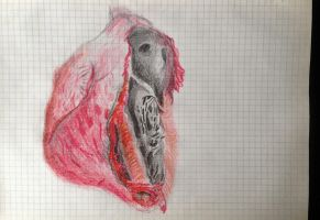 Torn apart heart by Pumais