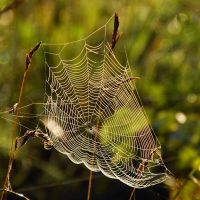 spiderweb fair IV by Wilithin