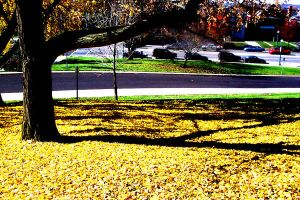 Yellow Leaves - Shadowed Tree by Sunlandictwin