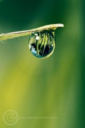 Dewdrop by sourcow