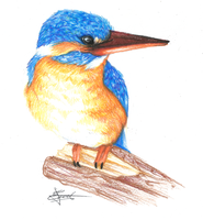 Kingfisher by HikariSilverEye