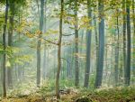 Sunlit misty autumn forest by zeitspuren