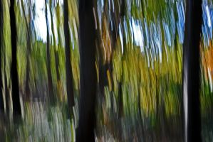 Blurred Woods by ApplePo3