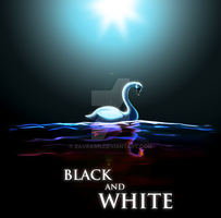Black And White Swans by zavraan