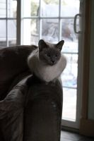Cat and Armchair by PenguinOfRohan