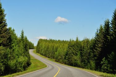 Road inside the green world by Taufake