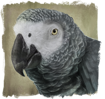 Grey parrot by RiverRaven