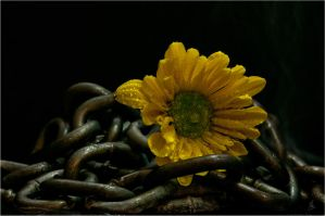 Chained by Jack-Nobre