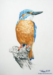 Kingfisher by blue5dragons