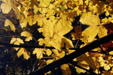 Automne by agridlet