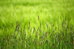Gras and Others by LoveForDetails