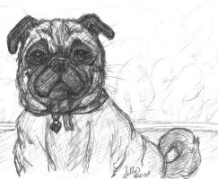 Sally the Pug by MillyT