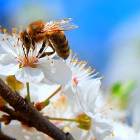 spring bee by iustyn