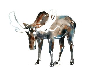 The Bull by SALTWatercolors