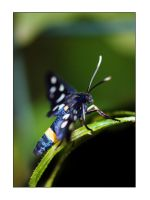 Blu butterfly by Nataly1st