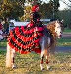 STOCK - 2014 Andalusian Nationals-259 by fillyrox