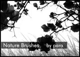 Nature Brushes by GMpara