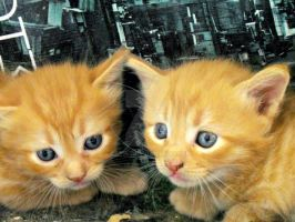 Twins. by Catist