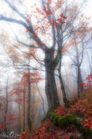 moment of autumn by Pod-Photography