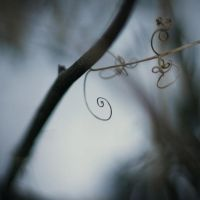 delicate by ThisFairyTale