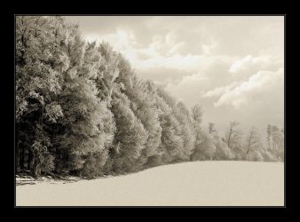 Ice-Forest by Hartmut-Lerch