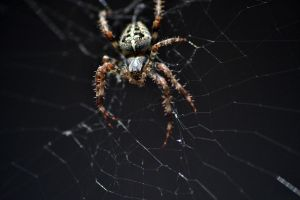 Spider by The-Other-Half-Of-Me