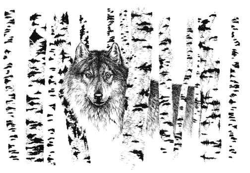 Wolf among birches by Grawuar