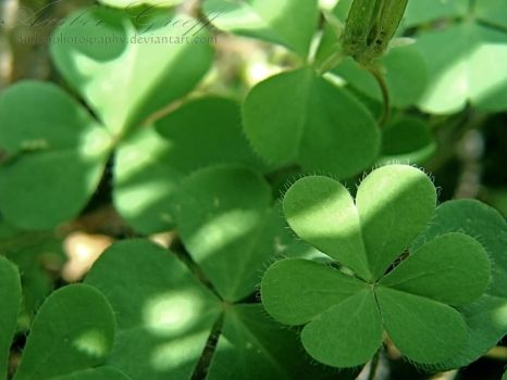 0026 - Green Luck by AmberPhotography