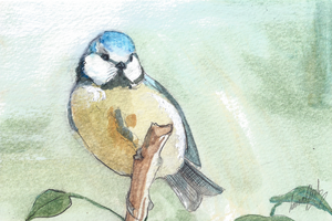 Blue Tit Postcard Painting by LauraClarkArt