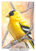Willow Goldfinch ACEO by LiquidFaeStudios