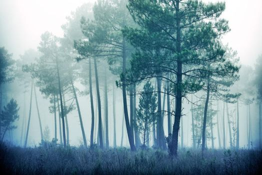 Cold forest ... by julie-rc
