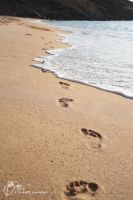 Walking in the sand by Nicho90