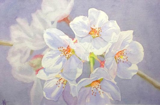 Blossoms by Michelle-T-Williams