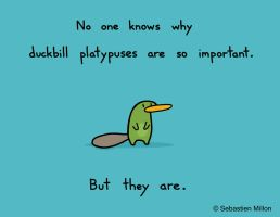 Duckbill Platypuses are Important by sebreg