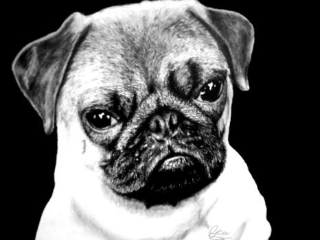 Pug by DuskEyes