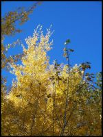 Gold Trees by Tizera