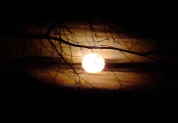 Moon with tree branch 1 by bunigrl