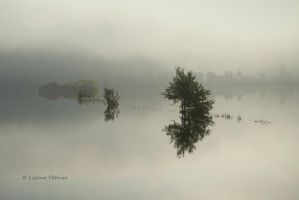 Flooded field by lpetrusa