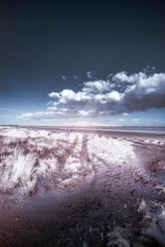 Shrubsss4 - Dollymount beach - Dublin - Ireland by V4ult
